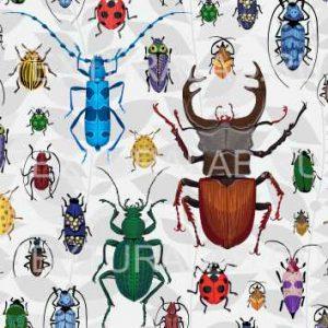 жуки 3